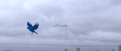 青のダリアのジャケット写真